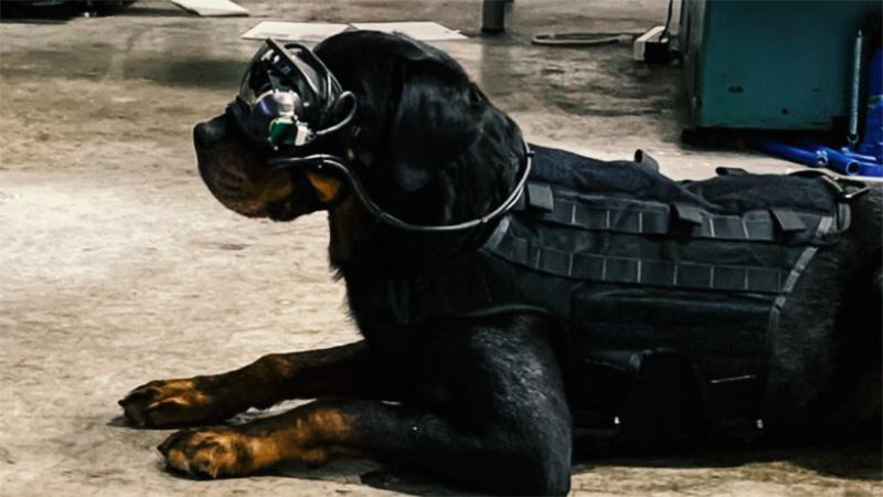 Американската војска изработи AR очила за кучиња (ВИДЕО)