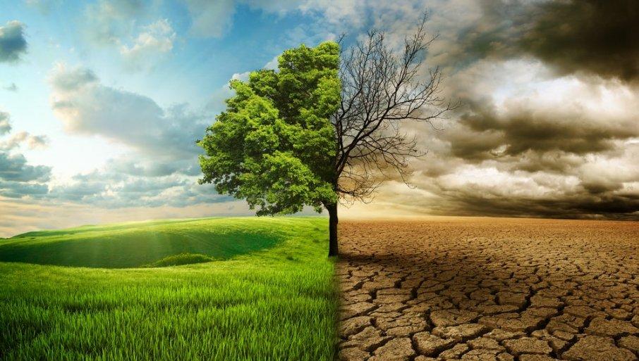 Британските научници предупредуваат: 40 проценти од растенијата се пред изумирање