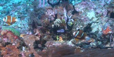 Во Австралија откриен корален гребен повисок од Ајфеловата кула