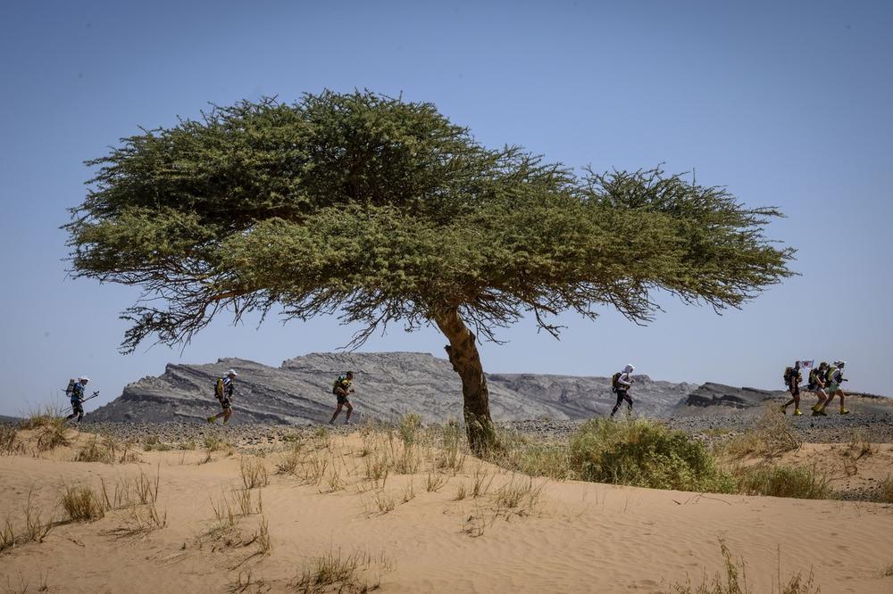 Пустините во Африка се исполнети со дрва
