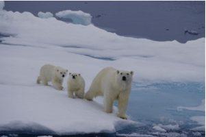 Пандемијата не ги ублажи значително климатските промени