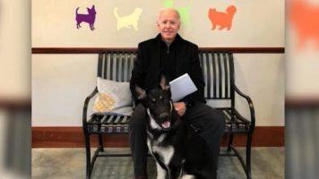 (Видео) Џо Бајден ја повредил ногата додека си играл со кучето, Трамп му посака брзо закрепнување