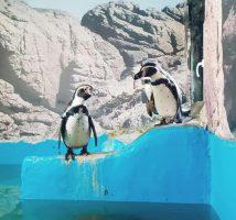 """Пингвините во скопската ЗОО се крстени по ликовите од """"Пингвините од Мадагаскар"""""""