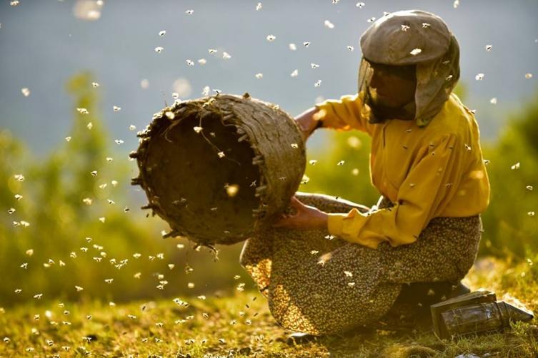 """""""Медена земја"""" меѓу 11. најдобри филмови на годината во Австралија"""