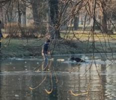 (Видео) Момче спаси две кучиња заглавени во езерото во Градски парк