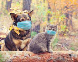 Научниците предупредуваат: Можеби и домашните миленици ќе треба да се вакцинираат против Ковид-19