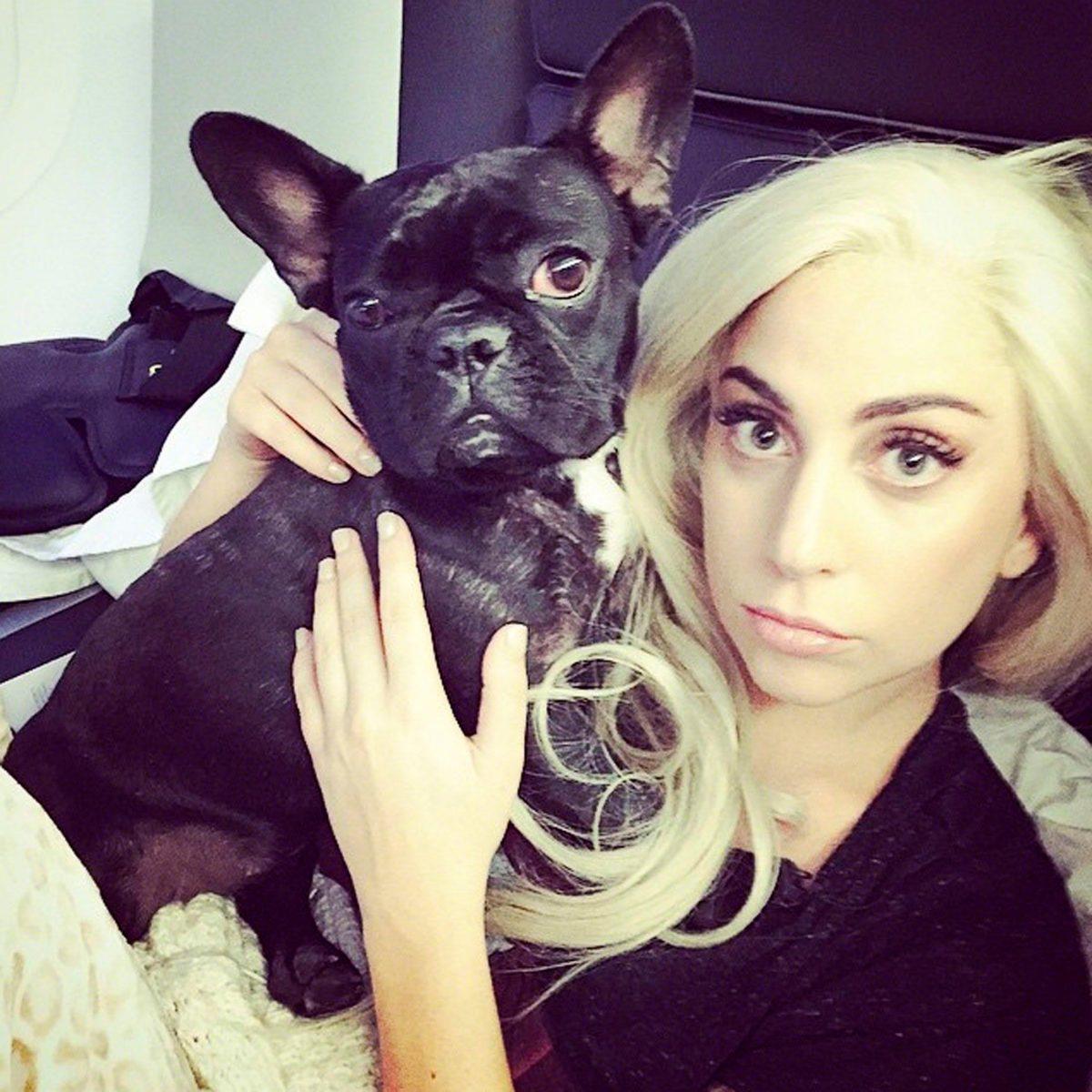 (Видео) Лејди Гага ќе плати скоро 100 илјади долари за чуварот на нејзините кучиња
