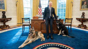 Кучето на Џо Бајден повторно гризна човек во Белата куќа