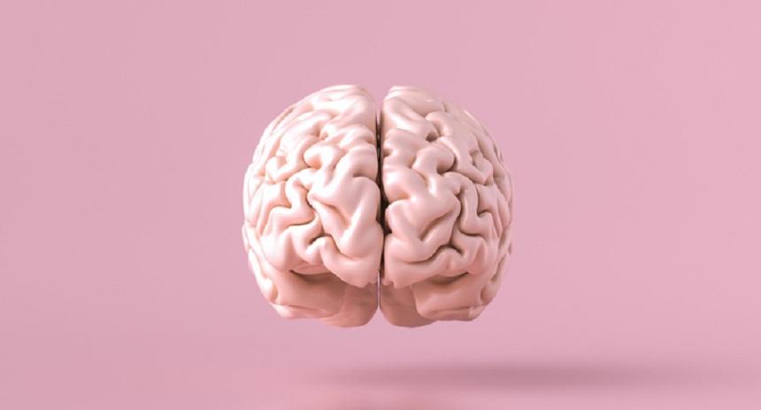 Мозокот на модерниот човек се развил подоцна отколку што се мисли