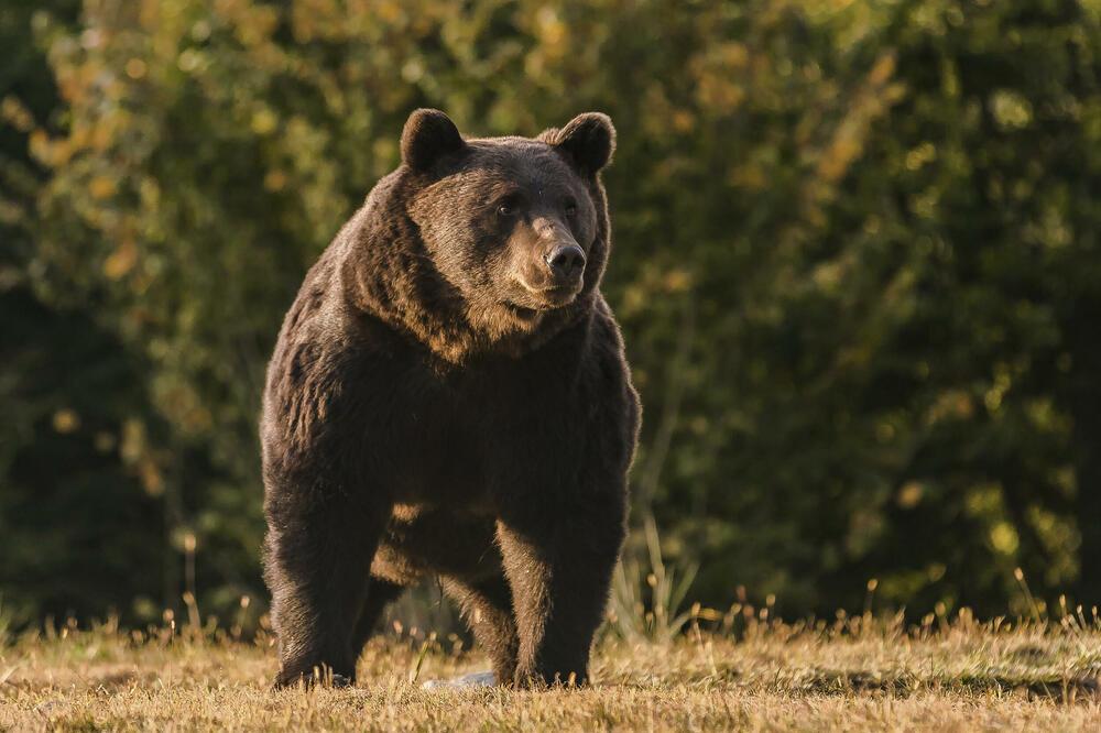 Принцот од Лихтенштајн e под истрага, затоа што ја убил најголемата мечка во Романија